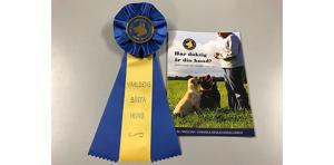Hur duktig är din hund? (Världens bästa hund, 10 st foldrar och 10 st rosetter)